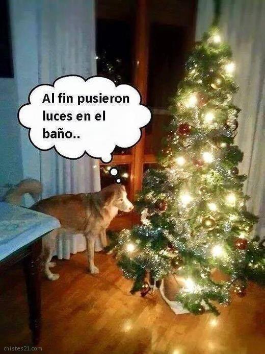 Felicitaciones De Navidad Risas.Los Memes Y Gif Mas Divertidos Para Felicitar La Navidad
