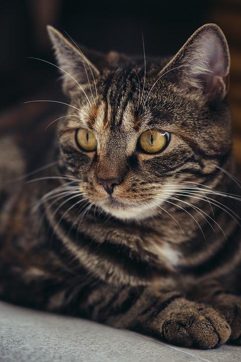 cat-3523992_960_720